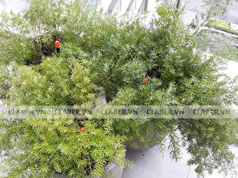 91228 dau phun 8 tia claber dep chau cay bui Đầu tưới 8 tia   Chân cắm/ 0 40 l/h adjustable shrubbler
