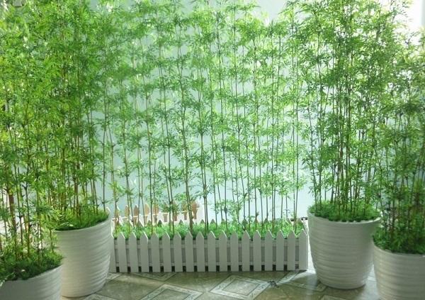 truc quan tu 600x... 5 loại cây cảnh dễ trồng cho sân vườn luôn đẹp