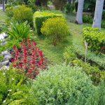 carmelina 10 150x150 Tưới cảnh quan Resort