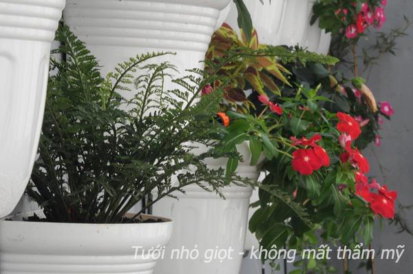 khong mat tham my3 6 lý do chọn hệ thống tưới nhỏ giọt cho nhà phố, biệt thự