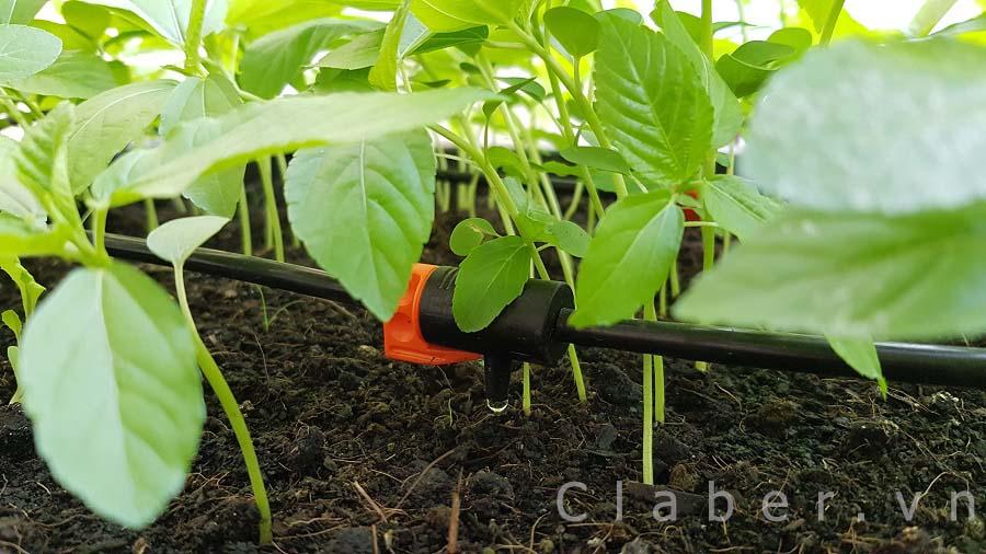 rau 1 1 Tưới nhỏ giọt Claber  lựa chọn hoàn hảo cho rau xanh ban công, sân thượng