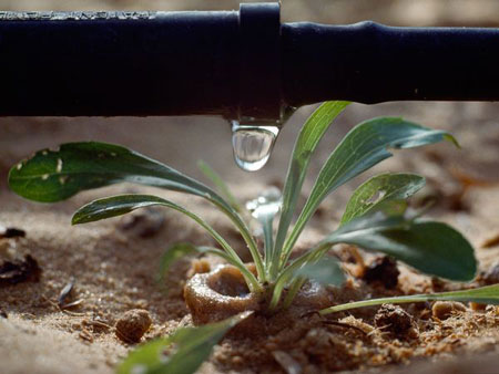 tuoi nho giot 1 Mẹo chăm sóc cây xanh trong nhà   hệ thống tưới nhỏ giọt