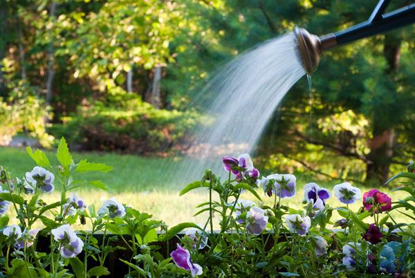 tuoi thu cong Sự khác nhau giữa hệ thống tưới nước tự động và thủ công
