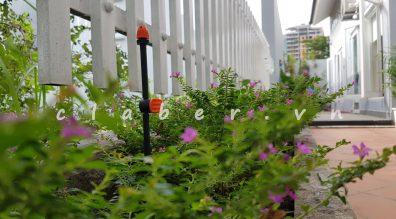 Hệ thống tưới cây tự động, thiết kế hệ thống tưới nhỏ giọt.