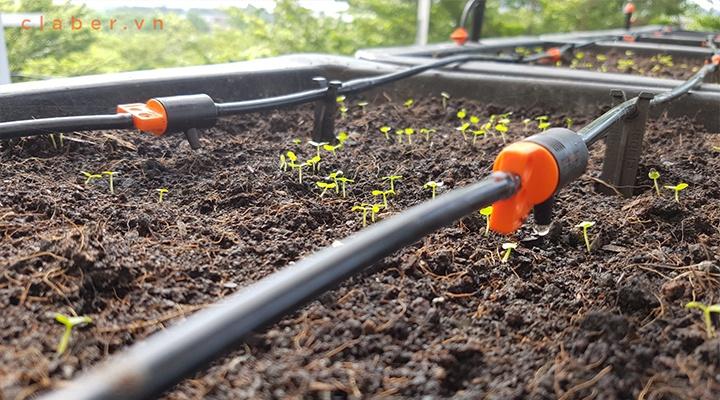 Hệ thống tưới nhỏ giọt tự động giúp trồng rau sạch