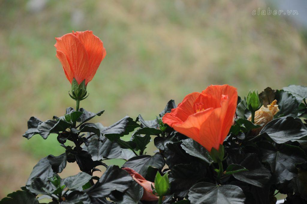 01 1024x680 [Quà tặng 20/10] Phụ nữ Việt Nam có còn yêu thích những bó hoa đẹp?