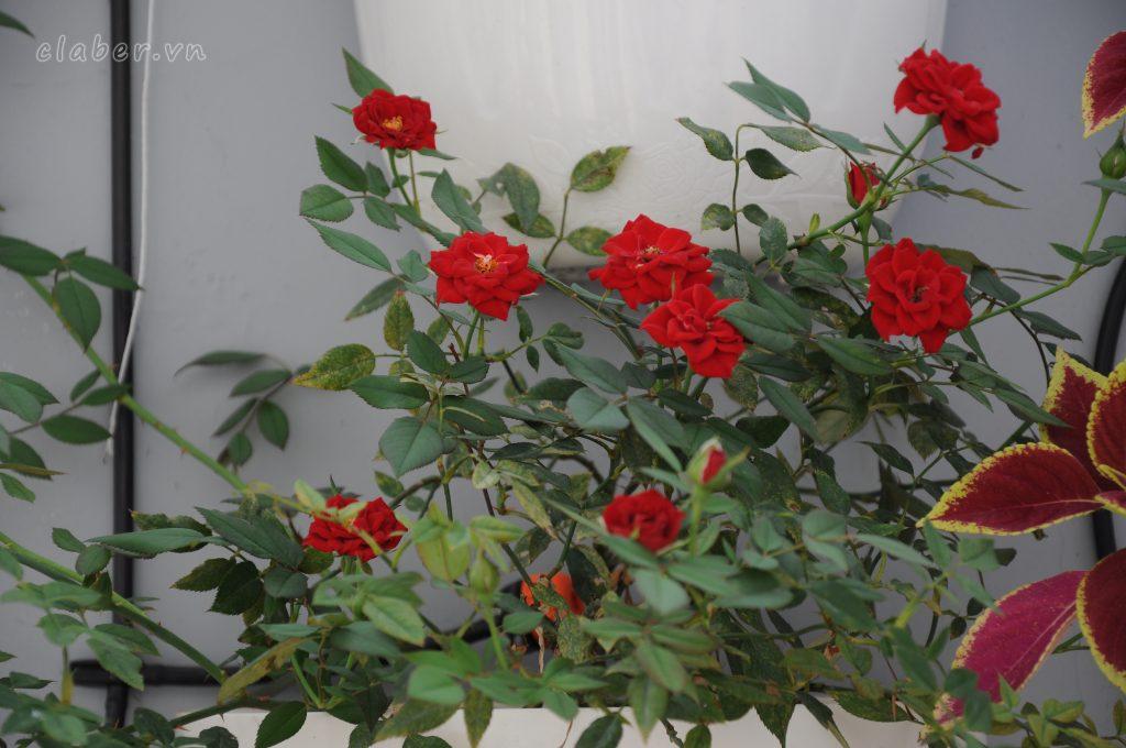 DSC 0019 1024x680 [Quà tặng 20/10] Phụ nữ Việt Nam có còn yêu thích những bó hoa đẹp?
