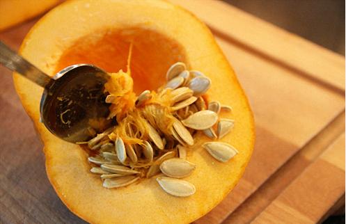 Cách trồng bí ngô Halloween trang trí lễ hội Halloween dùng hệ thống tưới tự động.