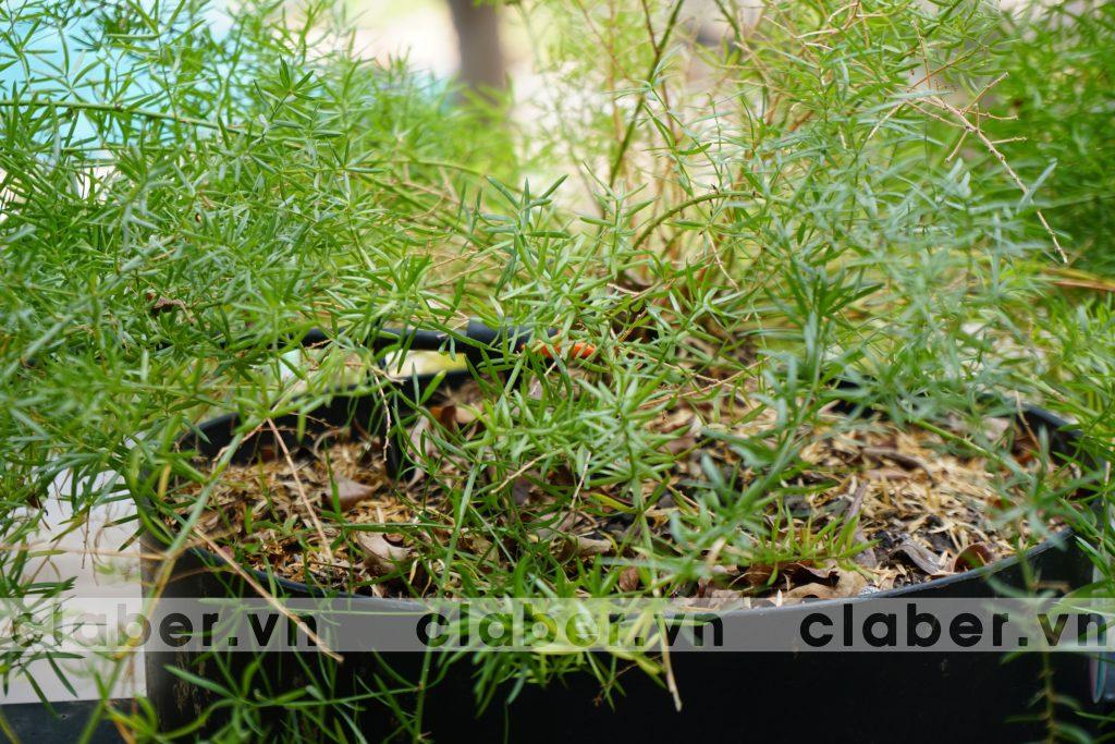 Ban cong 2 1024x683 Hệ thống tưới nhỏ giọt ban công – phủ xanh cuộc sống
