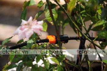 Những hệ thống tưới nhỏ giọt gọn nhẹ dành riêng cho người chơi cây Hà Thành