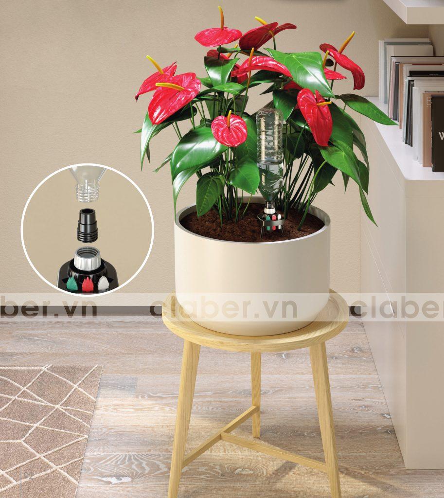 Hinh cat idris 913x1024 18 loại cây cảnh mini để bàn dễ trồng, hợp phong thủy trong nhà, văn phòng