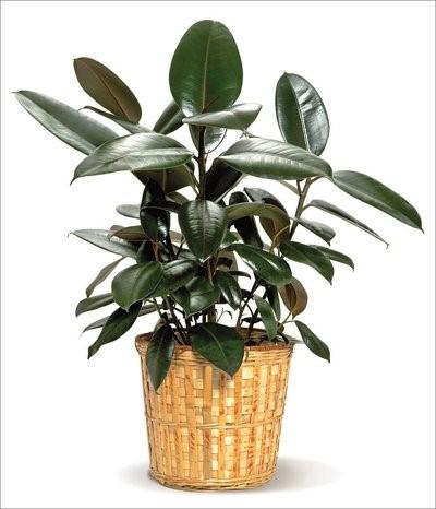 da bup do 1 18 loại cây cảnh mini để bàn dễ trồng, hợp phong thủy trong nhà, văn phòng