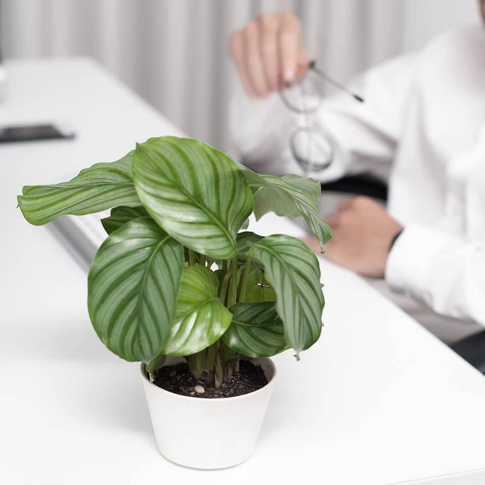 cây cảnh mini để bàn phong thủy trong nhà văn phòng