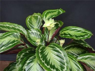 duoi cong hoa 18 loại cây cảnh mini để bàn dễ trồng, hợp phong thủy trong nhà, văn phòng