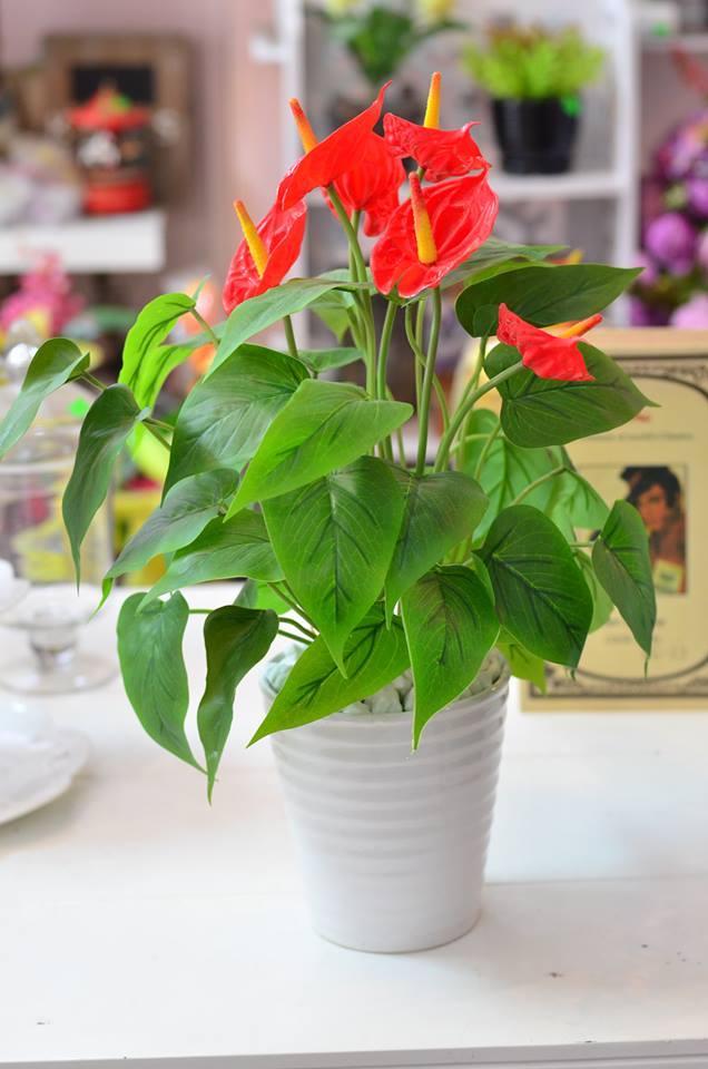 hong mon 2 18 loại cây cảnh mini để bàn dễ trồng, hợp phong thủy trong nhà, văn phòng