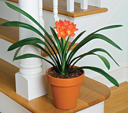 lan quan tu 1 18 loại cây cảnh mini để bàn dễ trồng, hợp phong thủy trong nhà, văn phòng