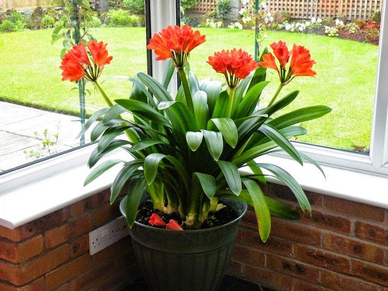lan quan tu 4 18 loại cây cảnh mini để bàn dễ trồng, hợp phong thủy trong nhà, văn phòng