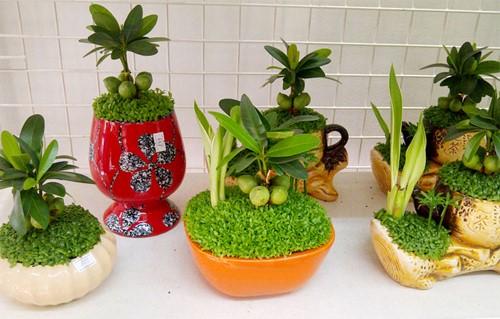 may man 1 18 loại cây cảnh mini để bàn dễ trồng, hợp phong thủy trong nhà, văn phòng