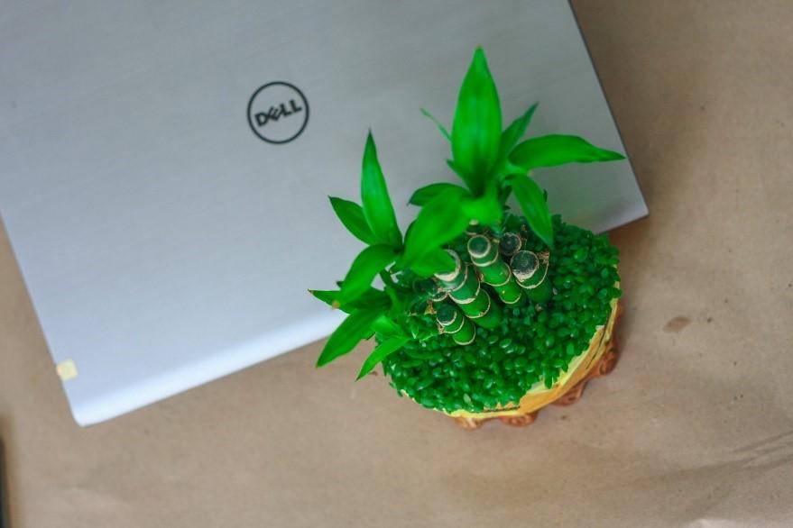 phat loc 2 18 loại cây cảnh mini để bàn dễ trồng, hợp phong thủy trong nhà, văn phòng