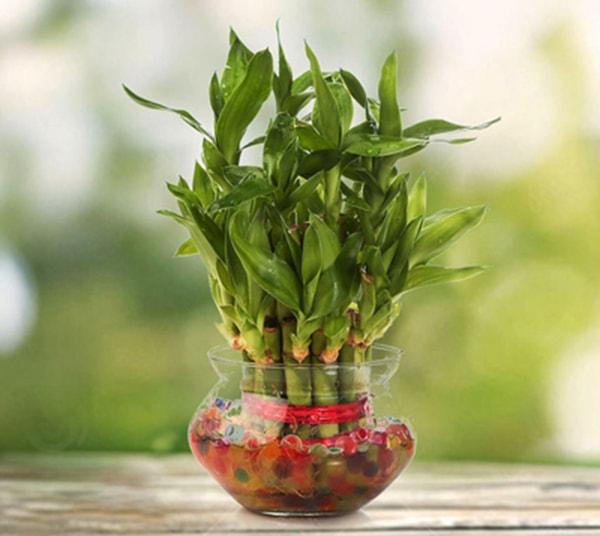 phat loc 3 18 loại cây cảnh mini để bàn dễ trồng, hợp phong thủy trong nhà, văn phòng