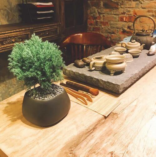 tung bong lai 3 18 loại cây cảnh mini để bàn dễ trồng, hợp phong thủy trong nhà, văn phòng