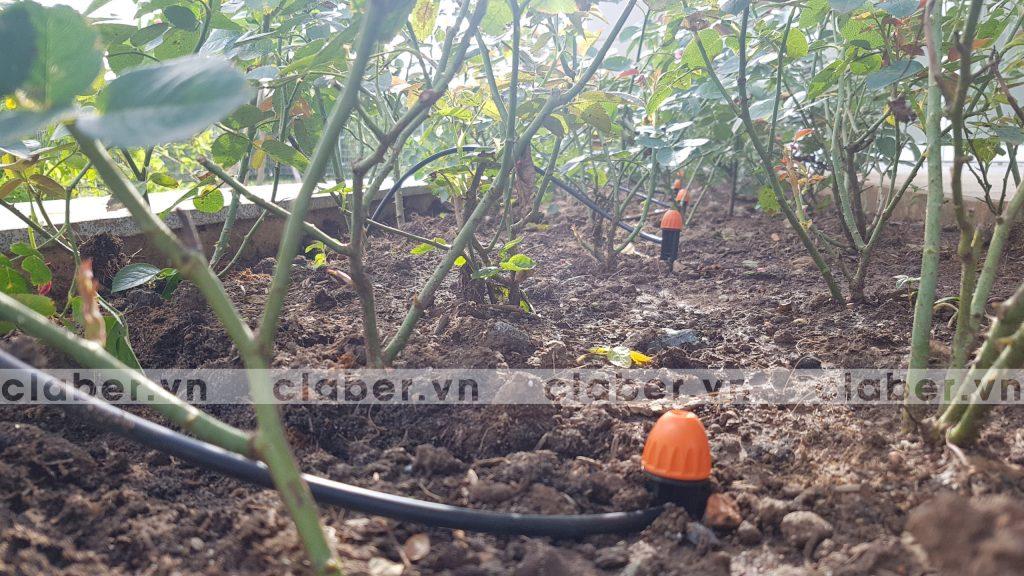 tuoi cay tu dong 24 copy 1024x576 5 bước hướng dẫn lắp đặt hệ thống tưới cây tự động cho sân vườn biệt thự có sẵn cây cối