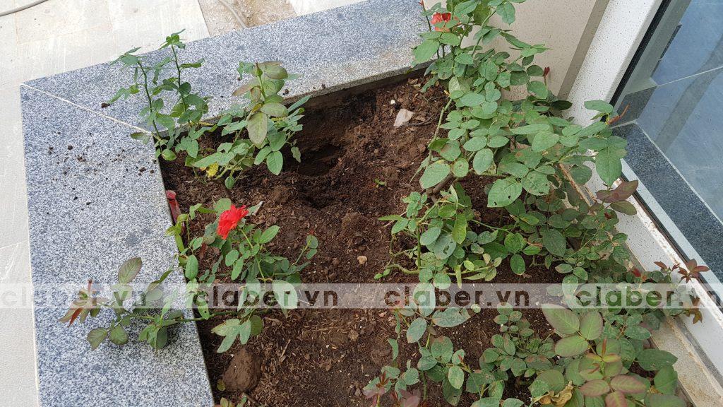 tuoi cay tu dong 27 copy 1024x576 5 bước hướng dẫn lắp đặt hệ thống tưới cây tự động cho sân vườn biệt thự có sẵn cây cối