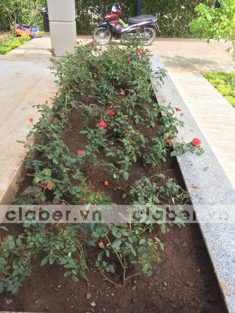 tuoi cay tu dong 33 copy 768x1024 5 bước hướng dẫn lắp đặt hệ thống tưới cây tự động cho sân vườn biệt thự có sẵn cây cối