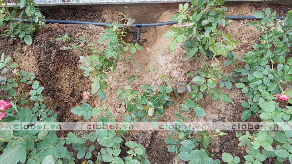hướng dẫn lắp đặt hệ thống tưới cây tự động sân vườn biệt thự
