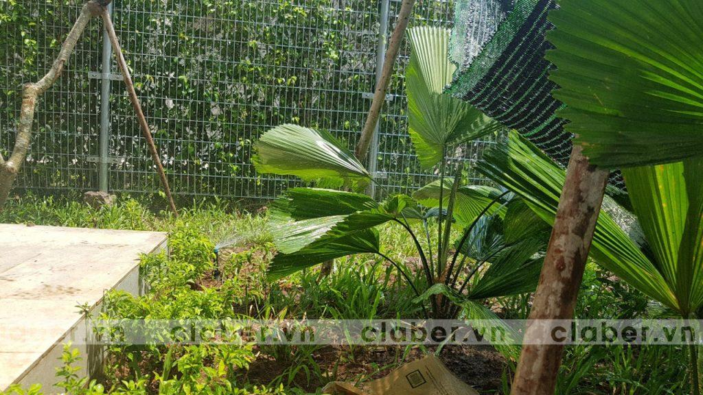 tuoi cay tu dong 44 1024x576 5 bước hướng dẫn lắp đặt hệ thống tưới cây tự động cho sân vườn biệt thự có sẵn cây cối