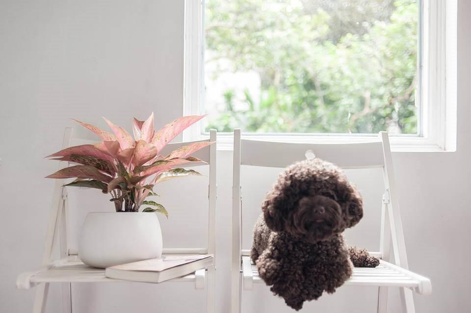van loc 2 18 loại cây cảnh mini để bàn dễ trồng, hợp phong thủy trong nhà, văn phòng