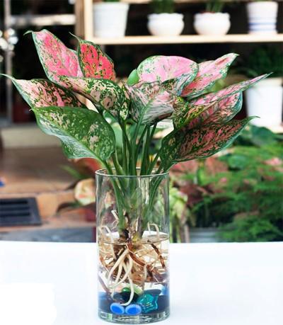 van loc 3 18 loại cây cảnh mini để bàn dễ trồng, hợp phong thủy trong nhà, văn phòng