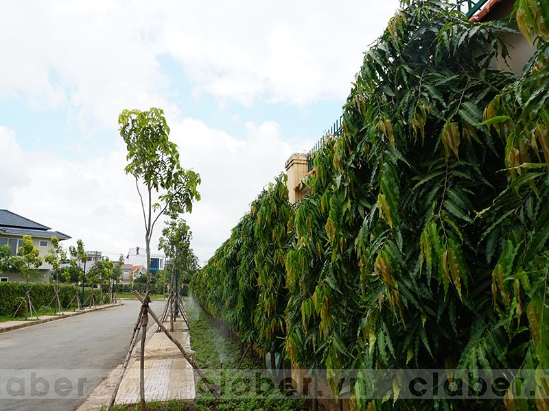 hệ thống tưới phun mưa vỉa hè có cây