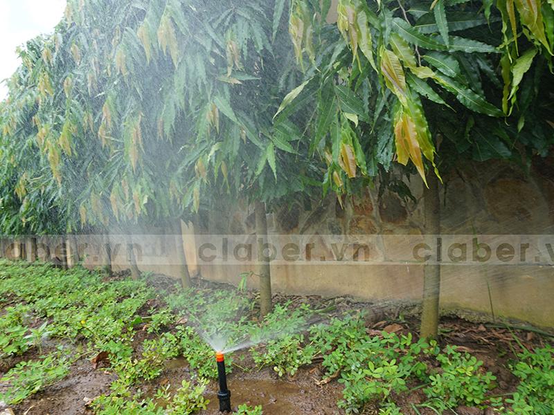 hệ thống tưới phun mưa vỉa hè hàng rào