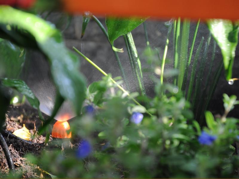 Những sai lầm trong việc chăm sóc lan và tầm quan trọng của thiết bị tưới phong lan