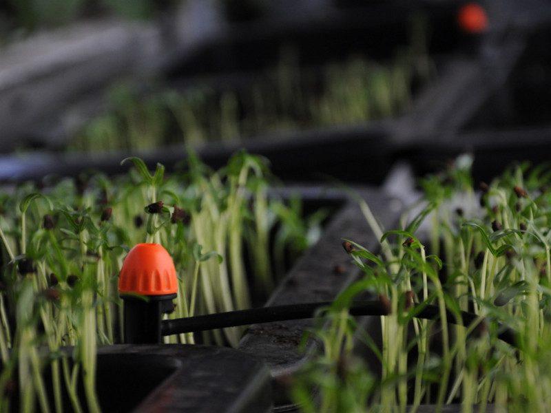Ý nghĩa của thiết bị tưới vườn tự động trong sản xuất nông nghiệp hiện đại