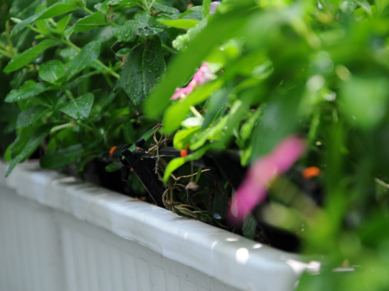 Thiết bị tưới cây nhỏ giọt phù hợp với loại cây trồng nào, nó có bền hay không
