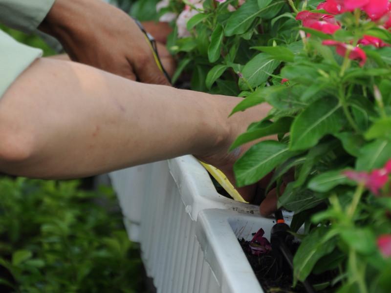 thiet bi tuoi nong nghiep 25 Thiết bị tưới vườn nhỏ giọt giải pháp lý tưởng cho mùa khô khắc nghiệt