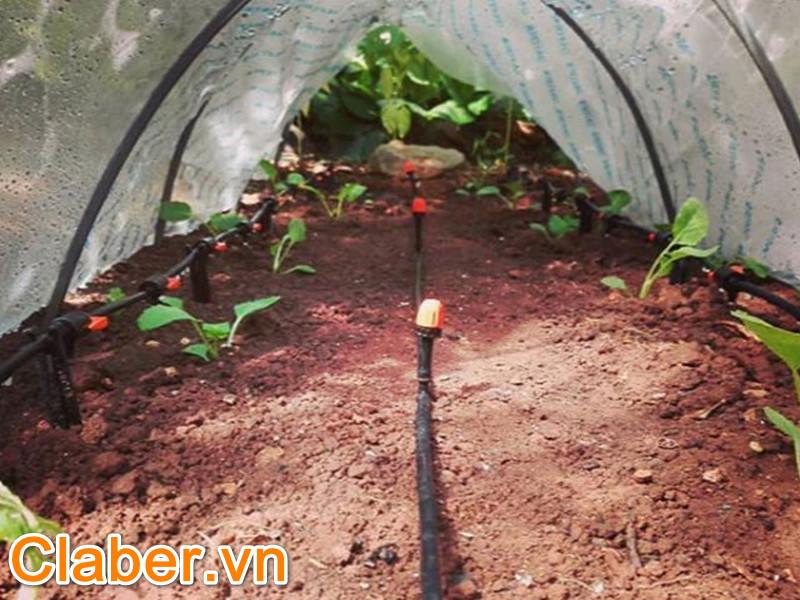 6 hiểu lầm tai hại về thiết bị tưới nông nghiệp mà ai cũng mắc phải