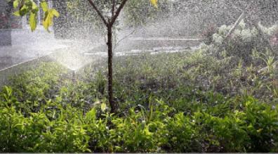 Mách bạn các loại cây cần sử dụng thiết bị tưới phun sương
