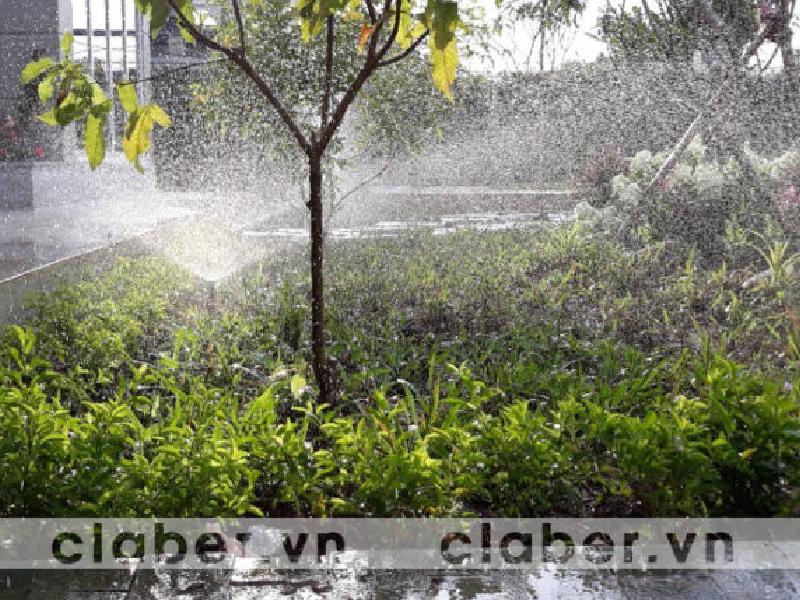 mach ban cac loai cay can su dung thiet bi tuoi phun suong Mách bạn các loại cây cần sử dụng thiết bị tưới phun sương