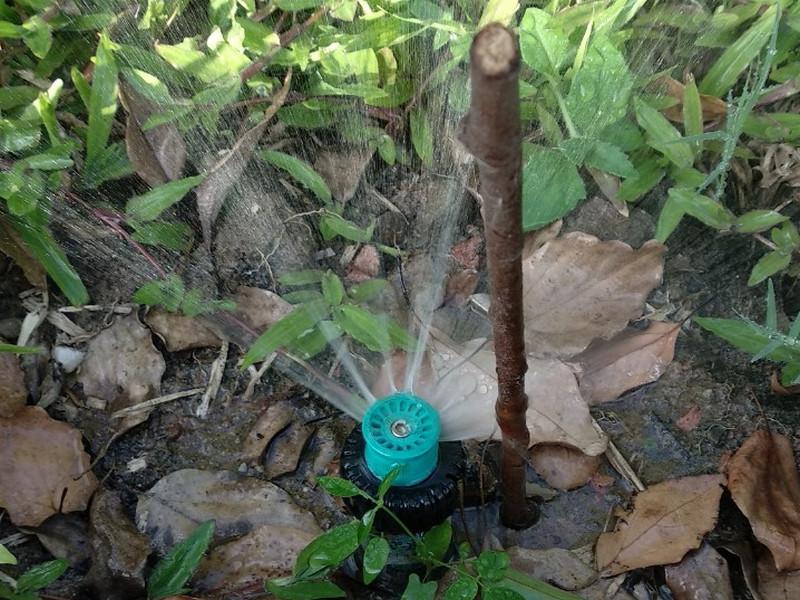 thiet bi tuoi 105 Kỹ thuật trồng cỏ cao sản với thiết bị tưới cỏ hiện đại