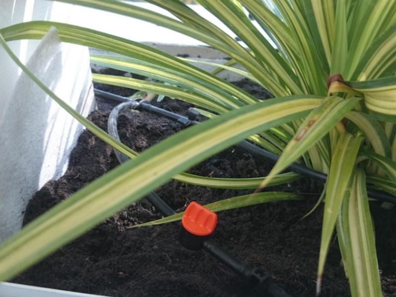 Thiết bị tưới dành riêng cho cây cảnh trồng trong chậu