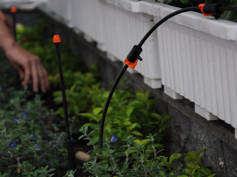 Lắp đặt Thiết bị tưới nước thông minh cho cây cà chua