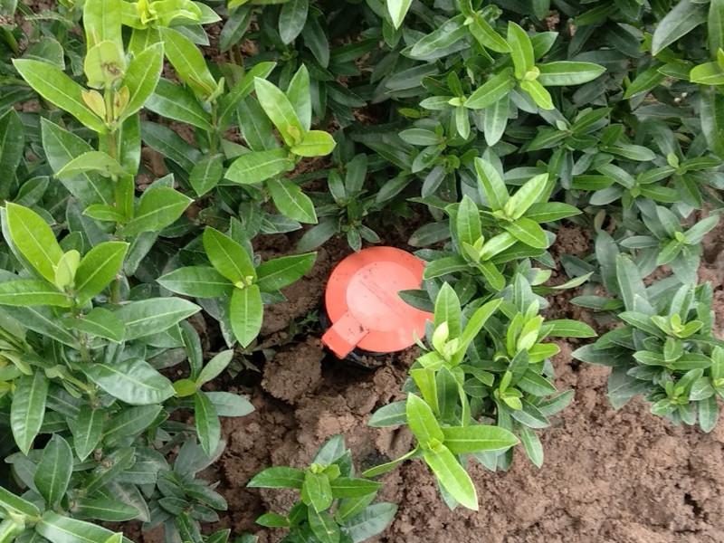 Chăm sóc cây cảnh bằng thiết bị tưới tự động