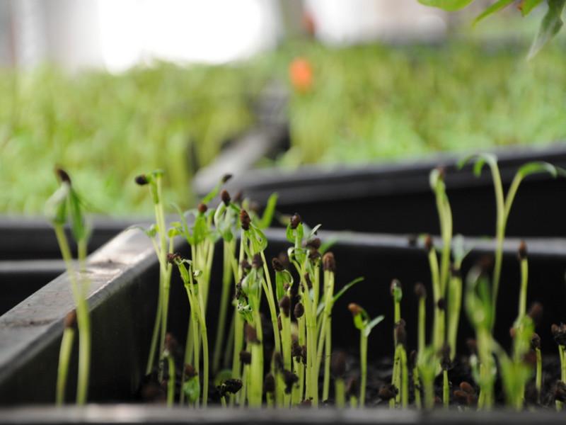 Thiết bị tưới rau mầm được ưa chuộng nhất năm 2019