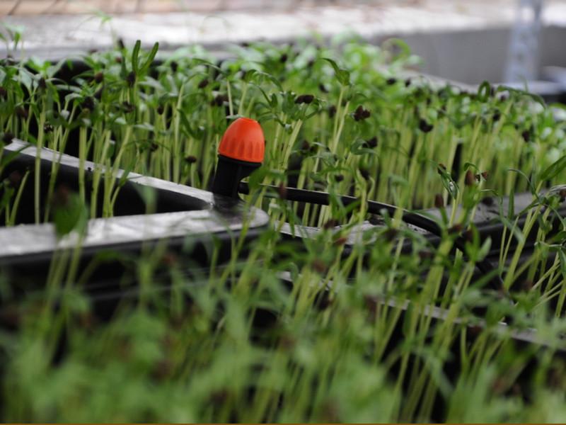 Sử dụng Thiết Bị Tưới Tp.HCM để bón phân an toàn cho cây trồng