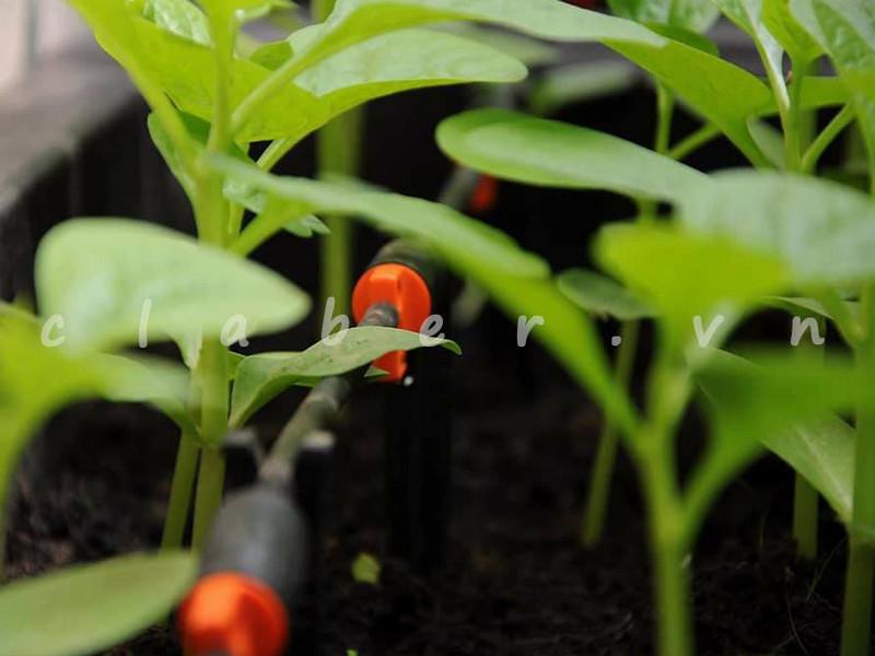 Giới thiệu Các Thiết Bị Tưới Nhỏ Giọt chuyên dùng cho cây cam