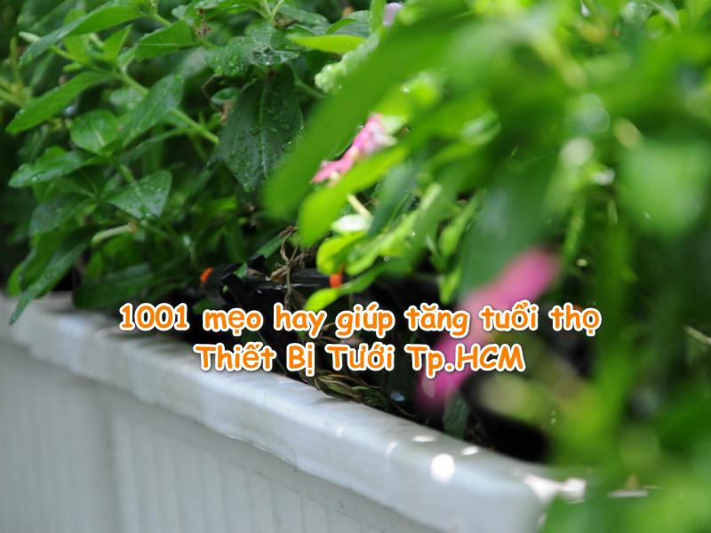 1001 mẹo hay giúp tăng tuổi thọ Thiết Bị Tưới Tp.HCM