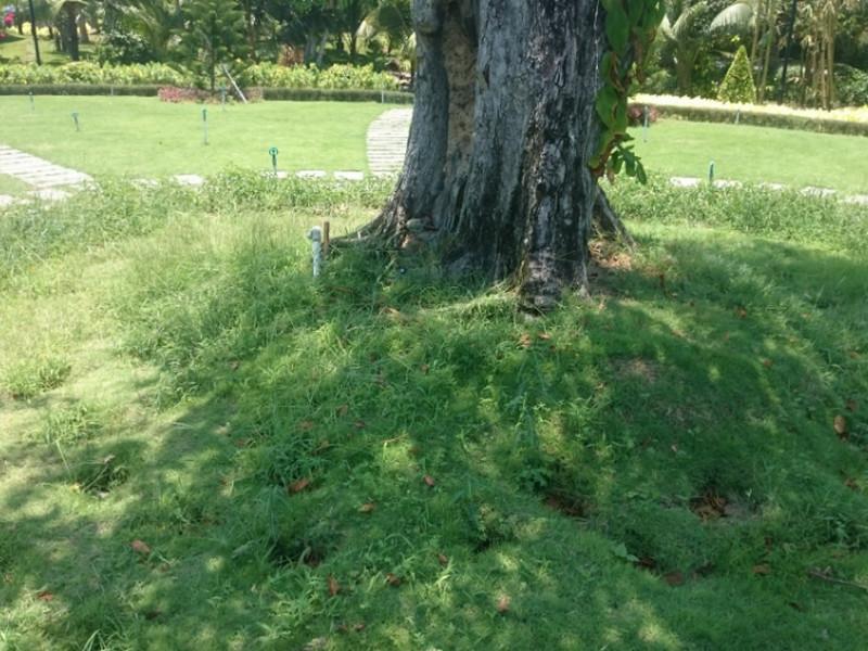 Thiết bị tưới sân vườn 2019 và những chi tiết không thể thiếu